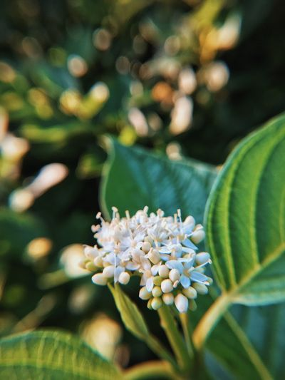 Macro Nature Plant Mobilephotography EyeEm Best Shots Flower Green Blur