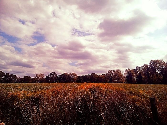Field Landscape Tranquil Scene Cloud - Sky Scenics Sky Beauty In Nature Tranquility Rural Scene Growth Day Majestic No People Non-urban Scene Nature Freshness