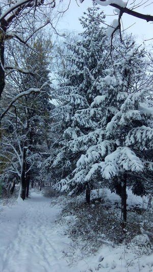 Beauty In Nature Branch Cold Temperature Day Nature No People Outdoors Scenics Sky Snow Snowing Tranquility Tree Weather Winter
