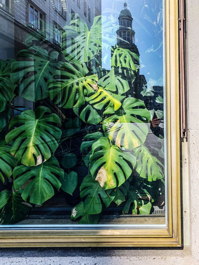 Close-up of green leaves on window against building