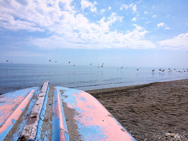 Sea Sky Water Horizon Over Water Beach Nature Cloud - Sky Beauty In Nature Bird Animal Themes Scenics Day Tranquil Scene Outdoors No People Large Group Of Animals Animals In The Wild Tranquility Sand Flock Of Birds