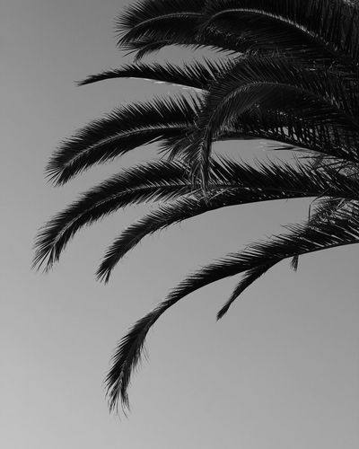 Palm Tree Palm Trees No People Ink Sky Outdoors Nature Nature Photography Black & White Blackandwhite Photography Bw_collection Bw_lover Bwphotooftheday Palms Graphic_arts_bnw Graphic Graphic Art Graphic Art Photo First Eyeem Photo EyeEmNewHere The Street Photographer - 2017 EyeEm Awards BYOPaper! Live For The Story Sommergefühle EyeEm Selects Been There. Connected By Travel