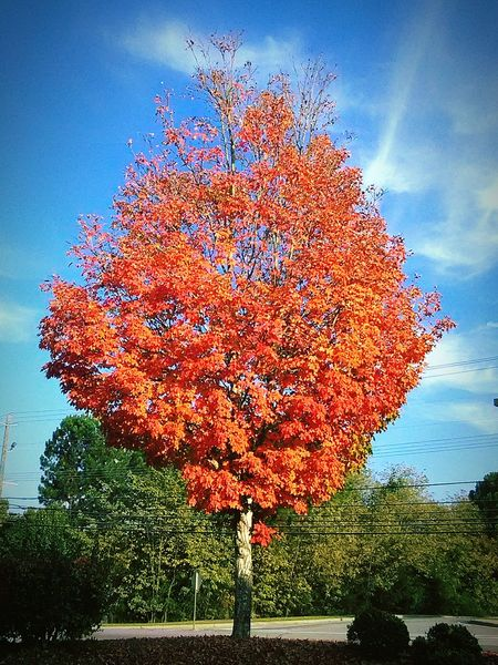 Fall Leaves Fun Outdoors October Sweet October! Sky Growth Red Sunset Beauty In Nature Nature No People Tree Day Outdoors Water Close-up