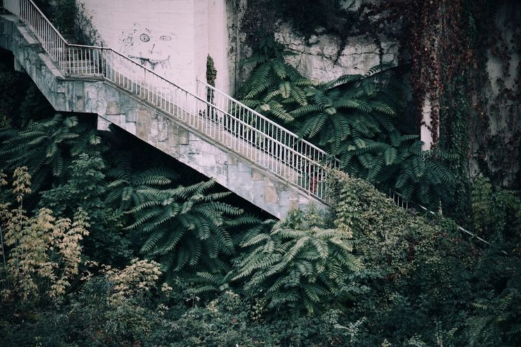 Old Steps By Plants Outside House