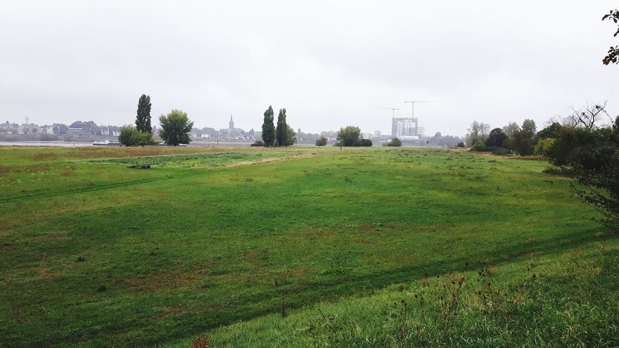 Tree City Field Park - Man Made Space Agriculture Rural Scene Sky Grass Green Color