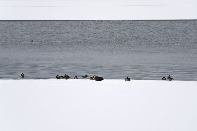 Birds swimming in snow against sky