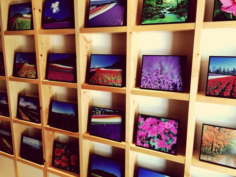 Indoors  No People Shelf Multi Colored Day Close-up Picture Flower Furano Hokkaido Japan