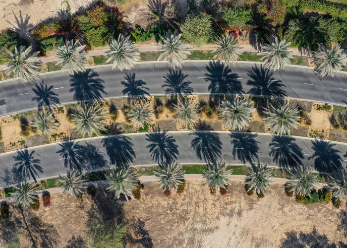 High angle view of palm trees on field