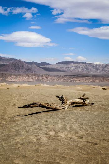 Driftwood on sand in desert against sky