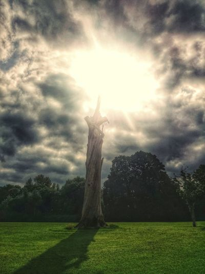 Today's walk.... dead tree touched the sunDead Tree Hdr Snapseed Light In Darkness No People Non-urban Scene Tree Sky Cloud - Sky First Eyeem Photo Power In Nature Finger Of God My Favorite Place Nature Outdoors Creativity