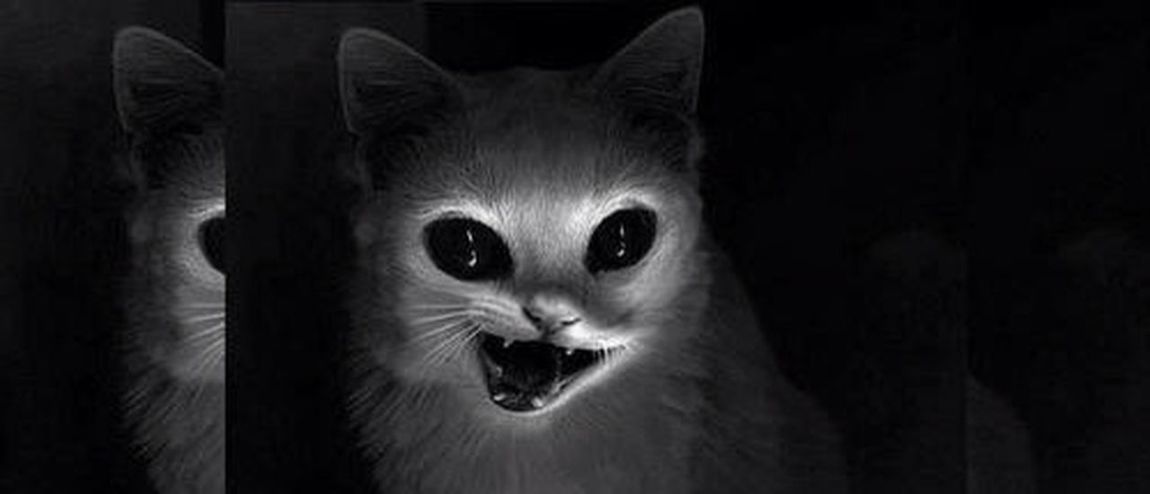 Cat Creepypasta Eyes Follow4follow