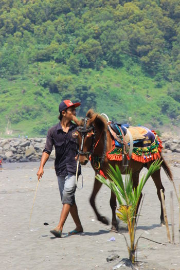 The Guider Beach Life Central Java,indonesia Horses INDONESIA Kebumen Person Real People Walking