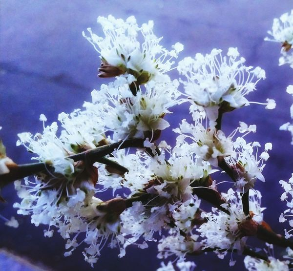 fleur My Garden Flower White Flower Flower Head Flower Tree Branch Springtime Stamen Petal Blossom Pollen White Color
