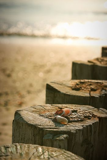 Close-up of chocolate on wooden post at beach against sky