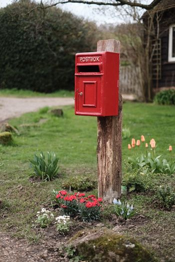 Plant Red Flower Nature Flowering Plant Grass No People Mailbox Beauty In Nature Public Mailbox Green Color Mail Outdoors Day Text Communication Growth Freshness Correspondence Sunlight