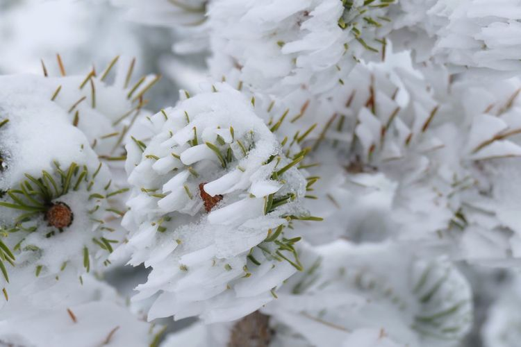 Nature's Diversities Wind-sculped snow. Carved Sculpted Snow For Ashikin Spring Flowers