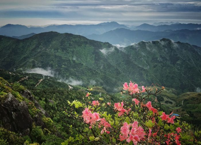 Pink Flowers Blooming Against Green Mountains
