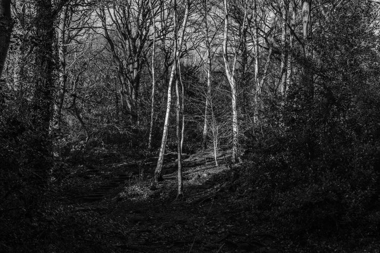 Leeds Meanwood Park Yorkshire Black And White Blackandwhite Day Forest Meanwood Trail Nature No People Outdoors Tranquil Scene Tranquility Tree West Yorkshire Uk EyeEm Ready