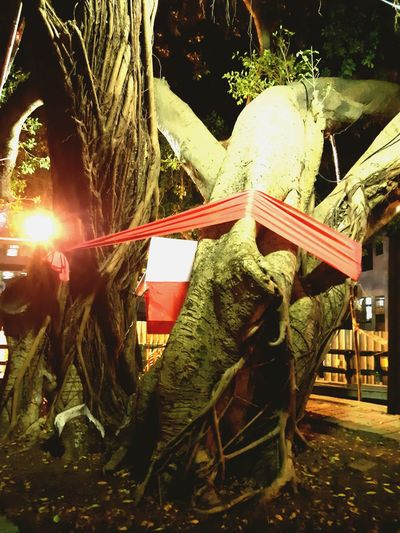福德老榕 So Big BIG Tree Carousel