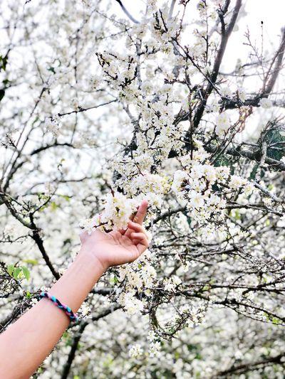 #plum flower