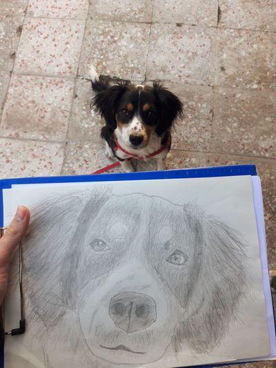 Portrait of dog holding camera on floor