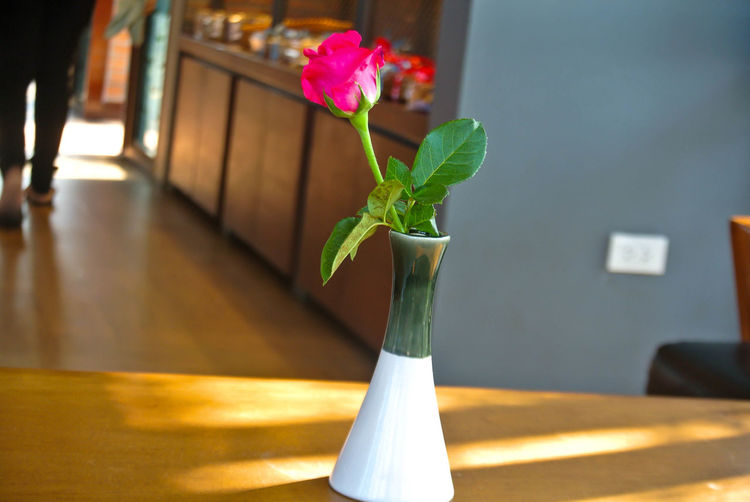 Close-up Day Flower Flower Head Fragility Freshness Growth Indoors  Leaf Nature No People Plant Potted Plant Table