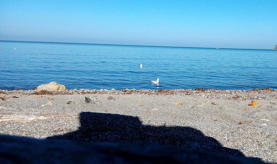 Lakeontario  Water Outdoors Beach Horizon Over Water Nature Animal Wildlife Canada Day Canada Photos
