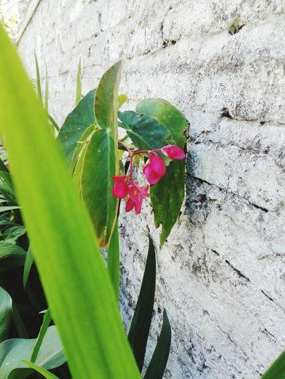 🌸 #lacasadelasflores Plant Growth Plant Part Leaf Beauty In Nature Flowering Plant Flower