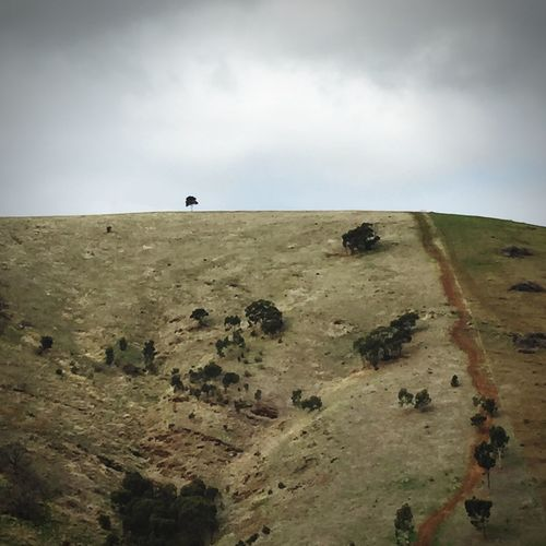 Hope on the horizon Hillside Tree Landscape Finding New Frontiers
