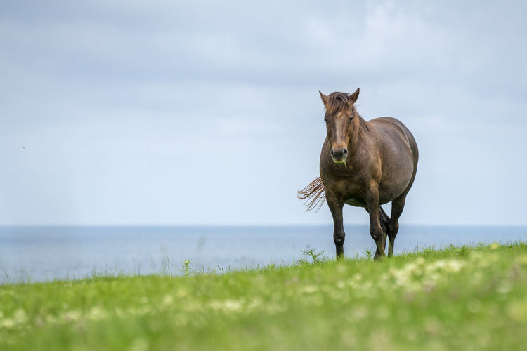 Wild horses shot on a green meadow by the sea shore. Wildlife Wildlife & Nature Horse Wild Horses Animals Spring Flowers Mammal Animal Themes Outdoors