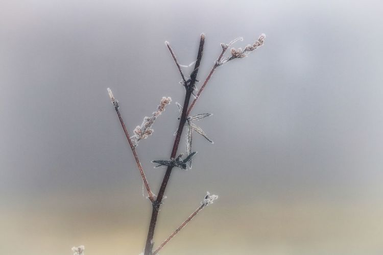 Nature Plant Branch Tree Close-up Beauty In Nature Twig Focus On Foreground Fragility Vulnerability  Growth Natural Beauty Bokeh Frozen Frosty Frost Beautiful Beautiful Nature Nature Photography Naturelovers Winter Wintertime Cold Temperature Cold EyeEm Nature Lover