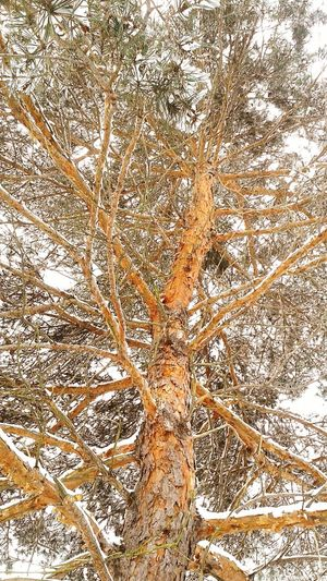 Beautiful Winter Trees Wintertime Winter Nature Outside Taking Photos Check This Out !