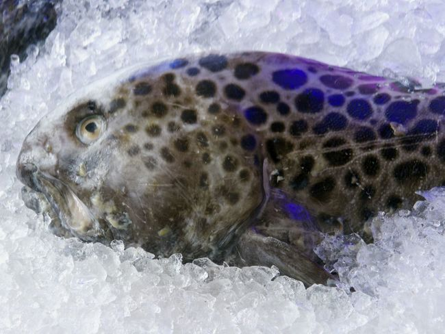Animal Themes Catch Of The Day Catfish Close-up Crashed Ice Day Fish Fish Market No People One Animal Outdoors Sea Life
