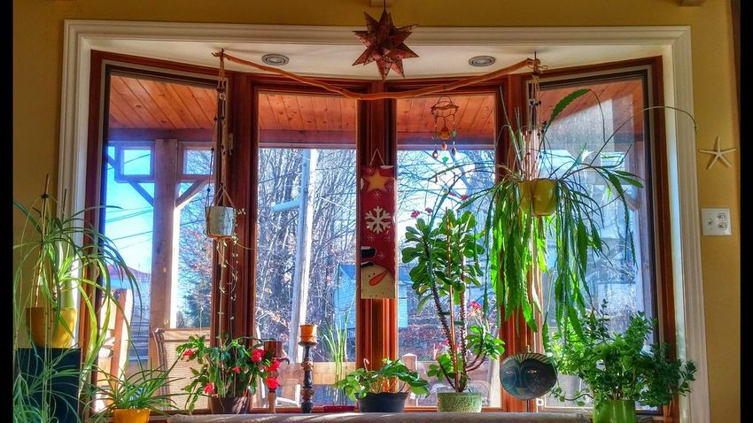 Window No People Indoors  Artistic Creative Photography Illuminated Personal Perspective High Angle View Morning Light Indoors  Autumn Sun Coming Through Window Multi Colored Enjoying Life Smartphonephotography