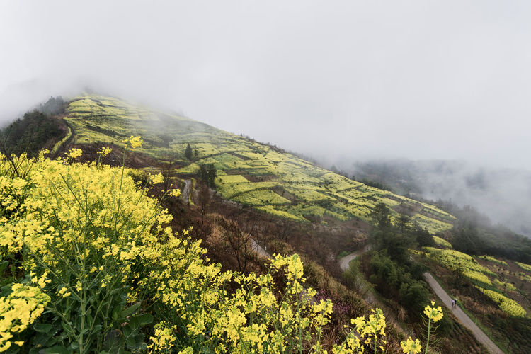 Fields on the mountains Agriculture Beauty In Nature Flower Fog Landscape Landscape_Collection Mountain Nature Plant Rural Scene Scenics Spring Yellow Paint The Town Yellow