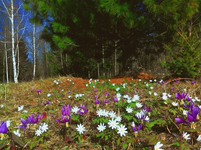 Snowdrops Landscape Nature EyeEm Nature Lover Nature_collection Spring Flowers