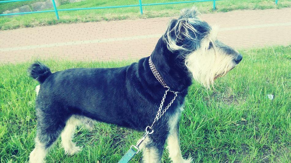 Dog Friend Pet