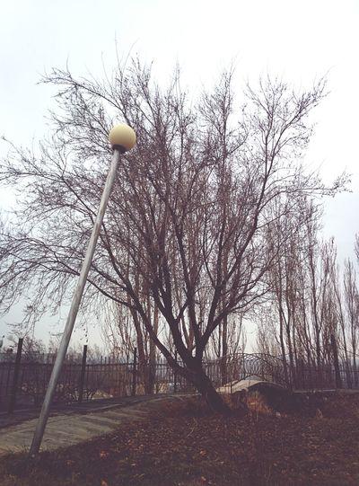 Love story Falling Down Bridge Tree EyeEm Nature Lover