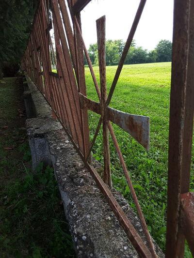Cross Fence Sun