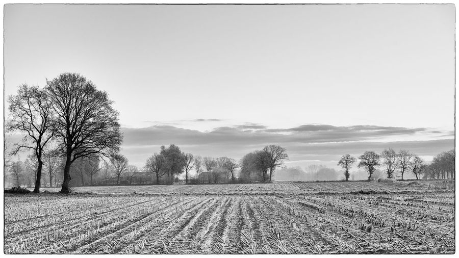 winter looks nice that way ;) Agriculture Bare Tree Blackandwhite Day Field Landscape Nature Nik Collection Nik Silver Efex No People Outdoors Preset Scenics Sky Tree White Winter