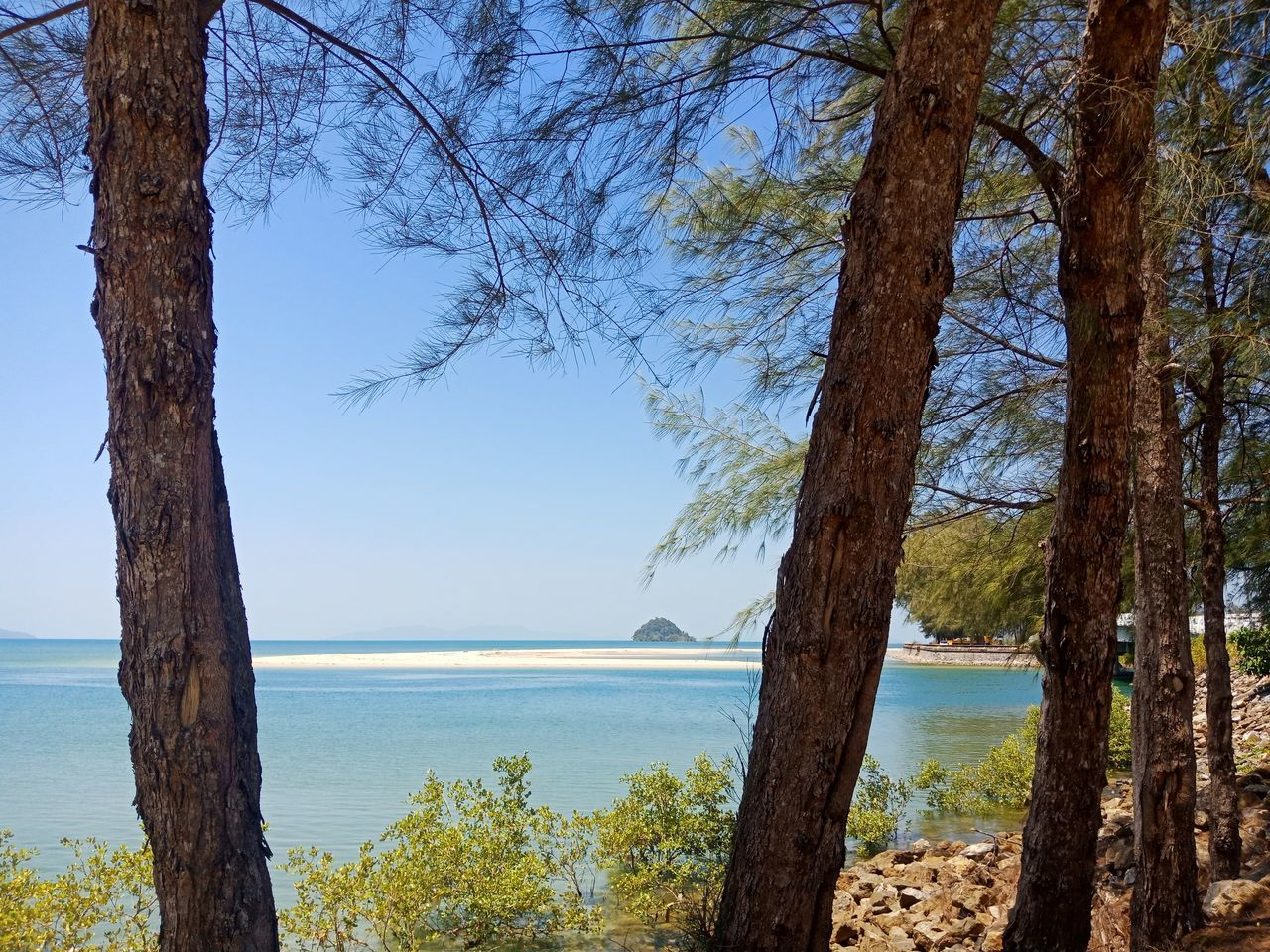 SCENIC VIEW OF SEA BY TREES AGAINST SKY