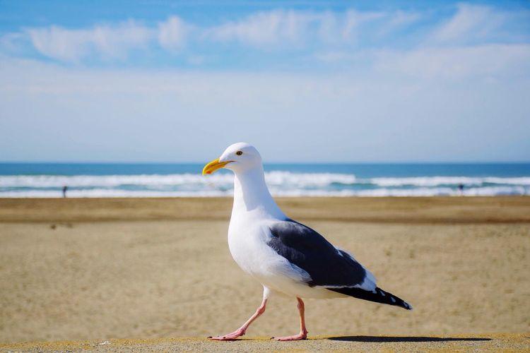 Why hello there. Enjoying The View Beach San Francisco EyeEm Best Shots Birds Nature Portrait