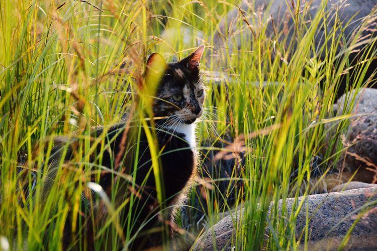 Domestic Cat One Animal Grass Domestic Animals Pets Feline Mammal Animal Themes No People Nature