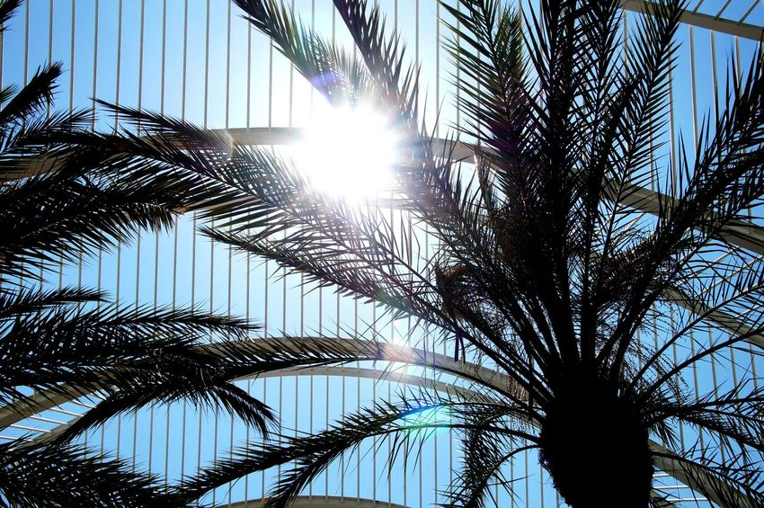 Sun Sunlight Low Angle View The City Light Sky No People Outdoors Growth Tree Day Close-up València ✌ Palm Palm Tree