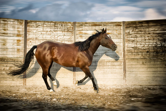 Animal Themes Autumn Colors Horse Lovely Nature One Animal Ranch Life Running Horse