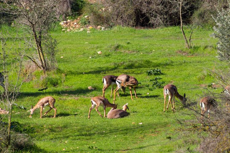 View of birds on grassy field
