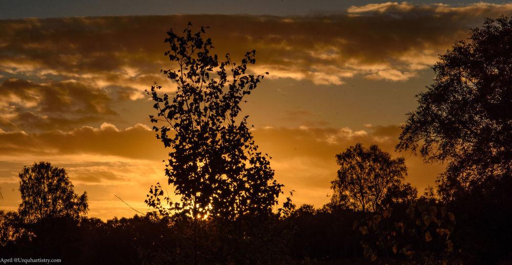 Sunrise over heathland in Suffolk. Sunrise Sunrise_Collection Sunrise Silhouette Tree Sky Silhouette Beauty In Nature Tranquil Scene Winter Morning Winter Sun Winter Trees Heathland  Heath Early Morning Early Morning Sky Scenics - Nature Cloud - Sky Dramatic Sky Beauty In Nature