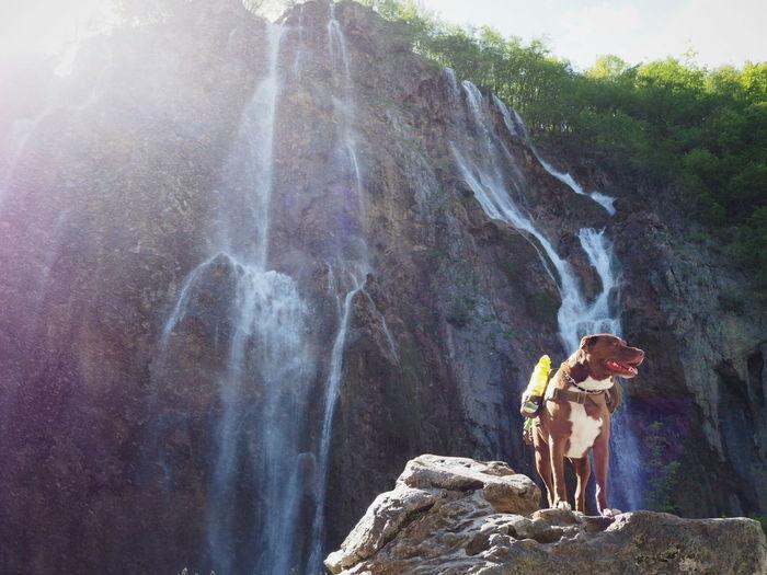Waterfall Mountain Adventure Outdoors Nature Day Cliff Rock Climbing Motion Water Pitbull Pitbulllover Pitbulllove Croatia Plitvice National Park Plitvice Plitvicka Jezera Plitvice Lakes National Park Trekking Nature