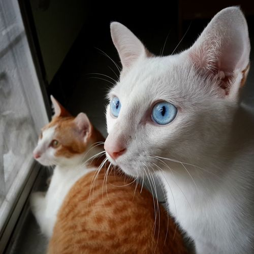 Close-up of cats by window
