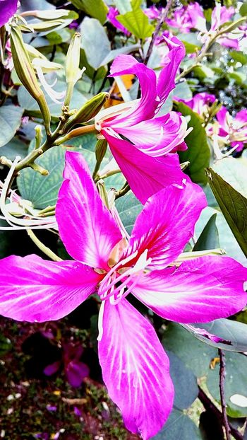 Flower Flower Collection Flower And Leaves Flower In The Garden Flowering Plants Color Of Nature Beauty Of Nature Beauty Of Flower Flower Color Pink Flower Beautiful Nature Flower Photography Flower On The Tree Pink Tones Pink And Green